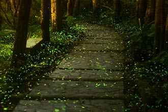 5 Places to see fireflies in Thailand